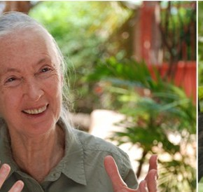 Jane Goodalls Roots & Shoots Programm